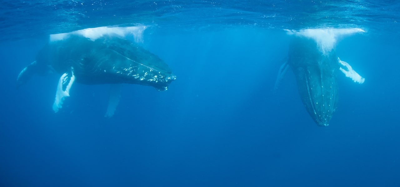 The Baja's Great Whales